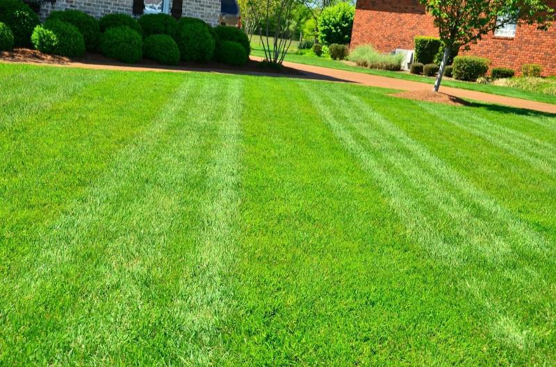 Ustawianie wysokości koszenia pozwoli lepiej zadbać o trawnik