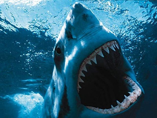 Skóra rekina z drukarki 3D