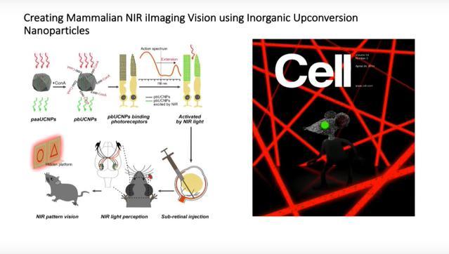 Schemat włączania nanocząsteczek do organizmu myszy