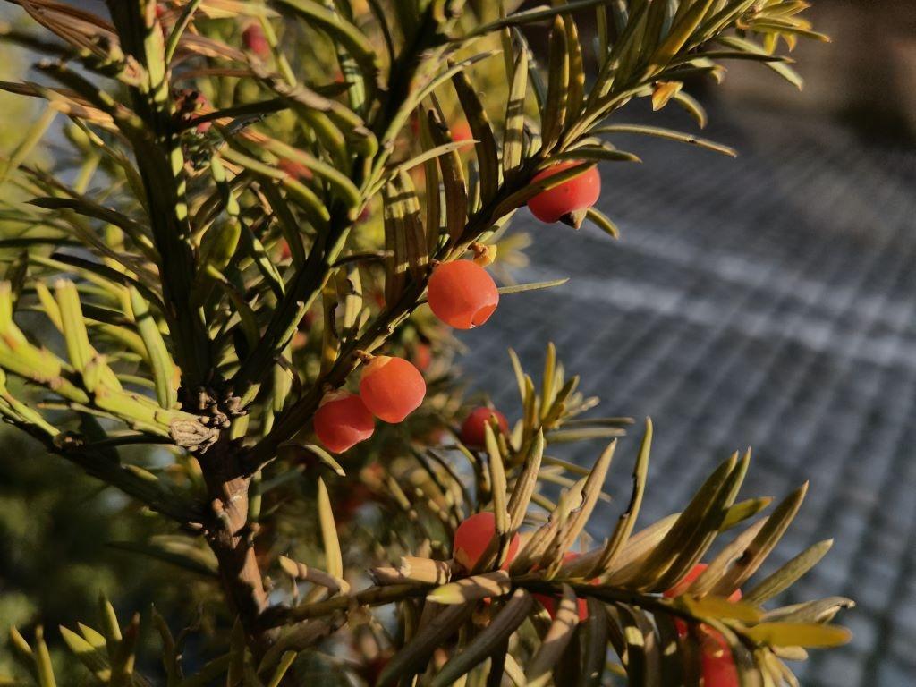 Sztuczna inteligencja w trybie rośliny na Huawei Mate 40 Pro