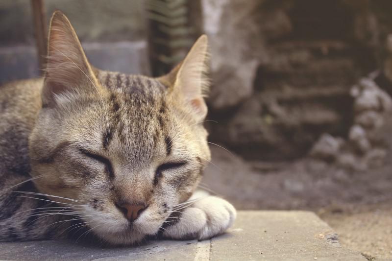 Cichy klimatyzator zapewni dobry sen