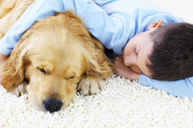 Mieszkanie z pupilem - jak usunąć sierść z dywanów