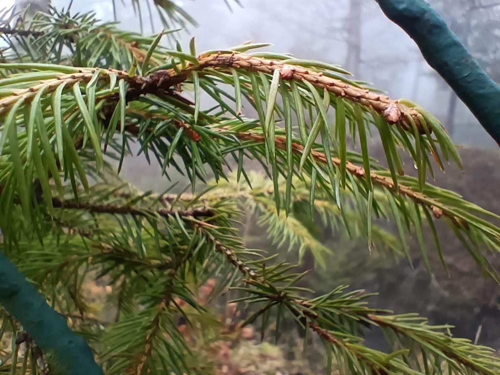 Tryb makro - zdjęcie gałęzi