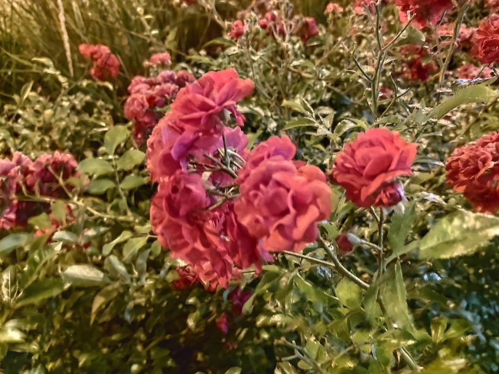 Zdjęcie kwiatów w trybie nocnym