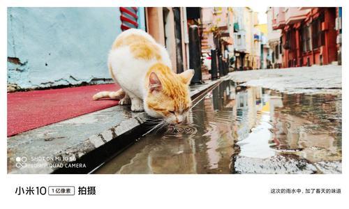 Kot zdjęcie xiaomi Mi 10
