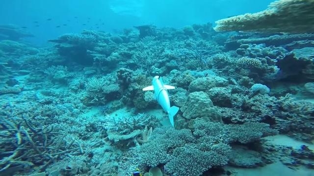 Robo-ryba pomoże odkryć tajemnice mórz i oceanów