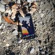 Evolveo StrongPhone Q6 LTE 8GB Czarny (SGP-Q6-LTE-B)