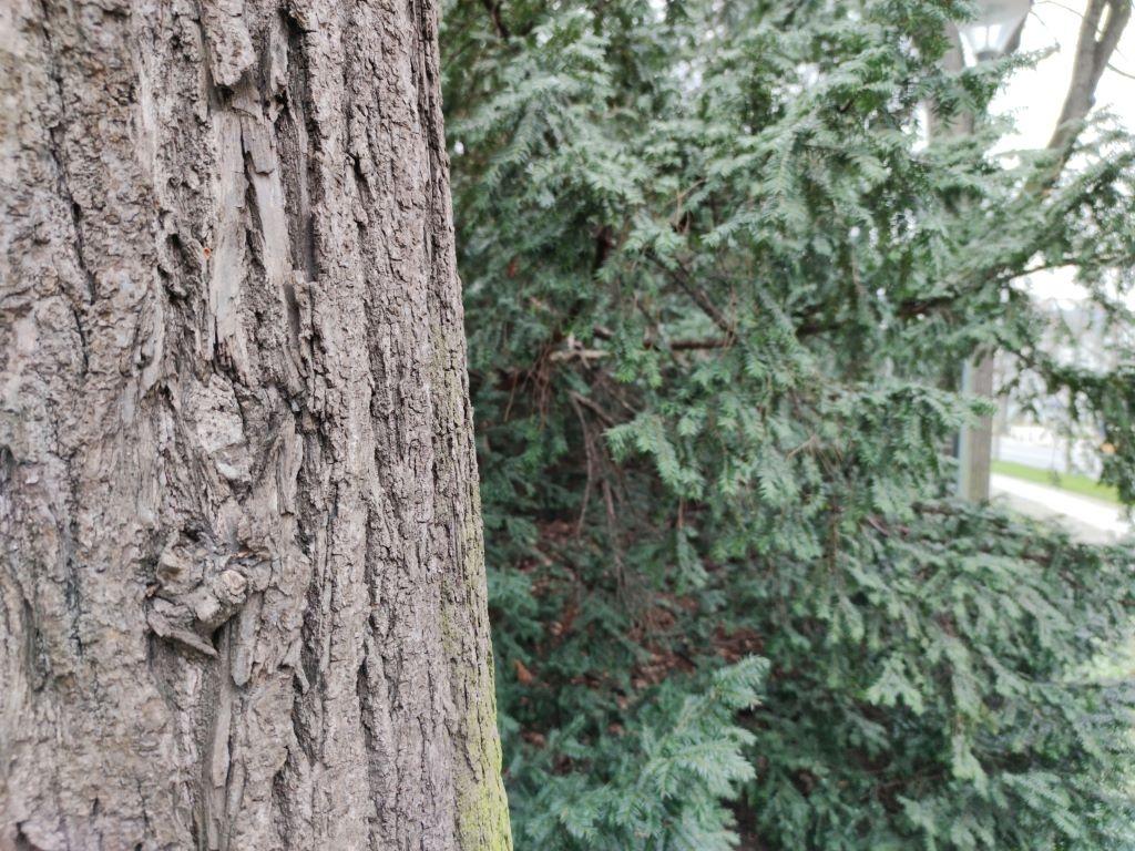 108 MPix ze zbliżeniem na drzewo
