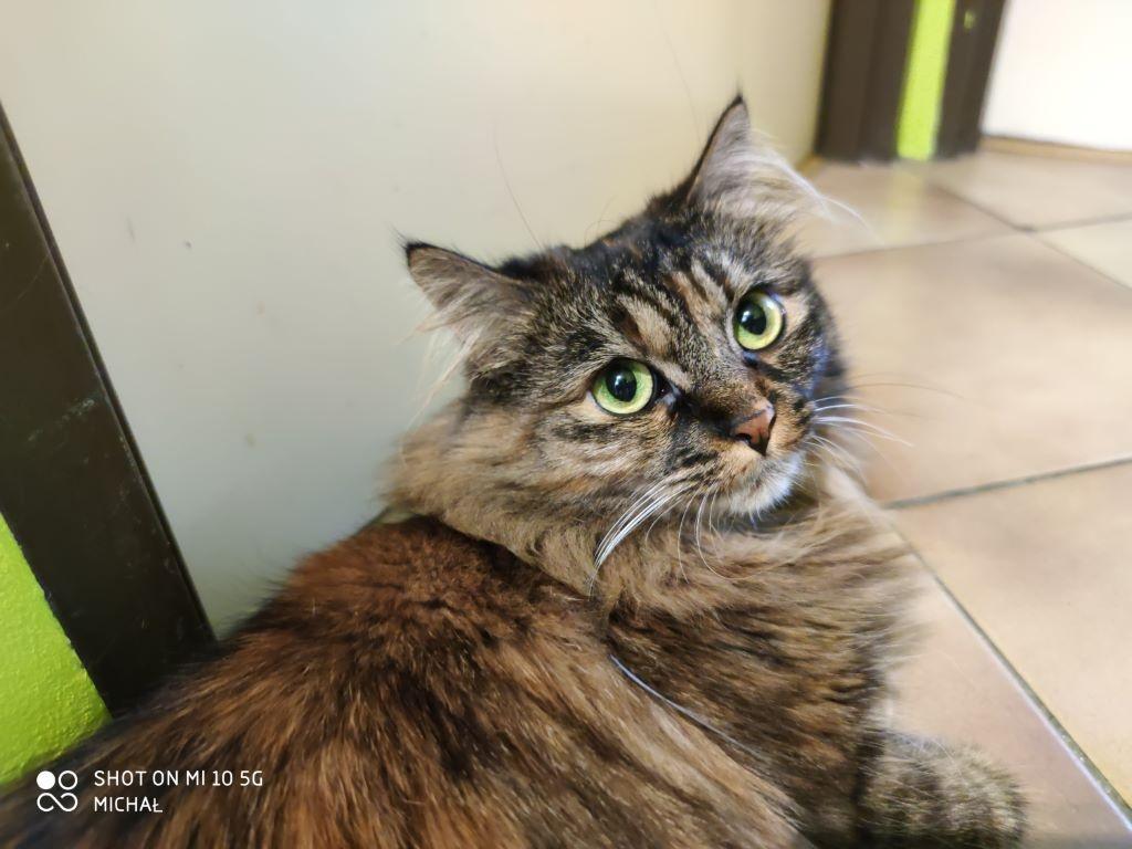 Xiaomi Mi 10 - zdjęcie kota w trybie AI - kot