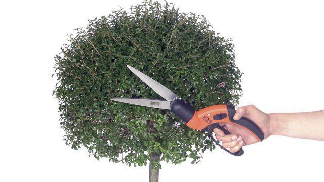 Ręczne nożyce ogrodowe sprawdzą się do precyzyjnego przycinania w małych ogrodach