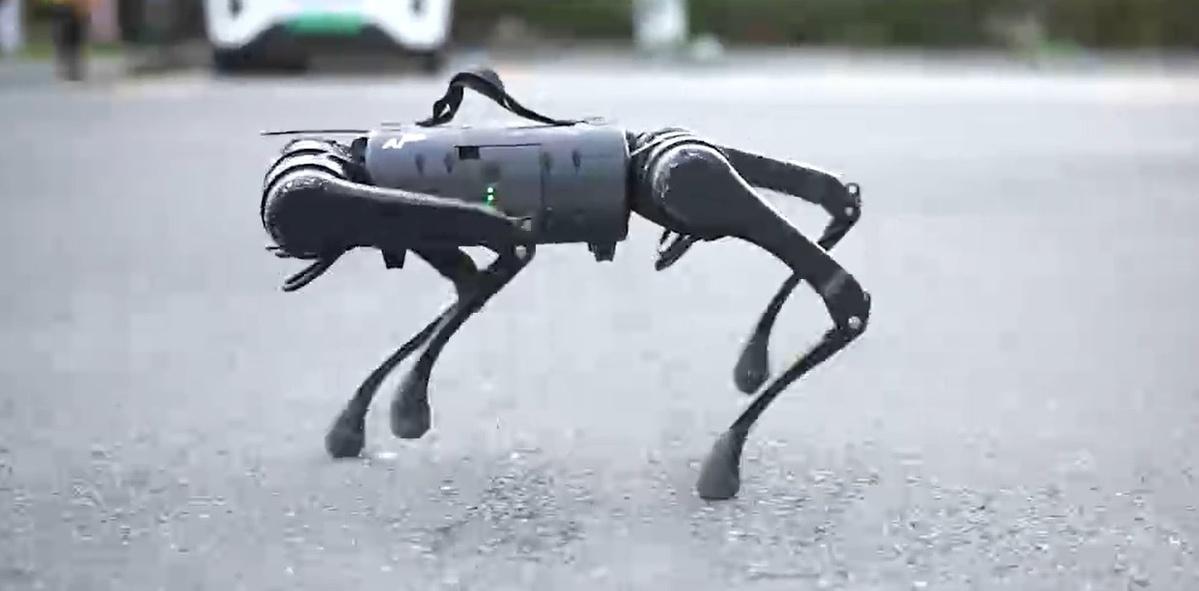 Robot Unitree A1 bez problemu przemieszcza się po nierównych nawierzchniach