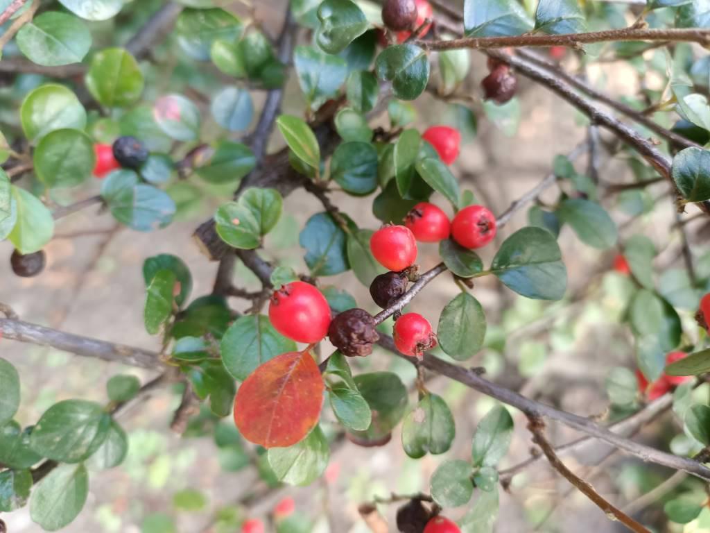Oppo Reno Z - przykładowe zdjęcie rośliny - tryb sztucznej inteligencji