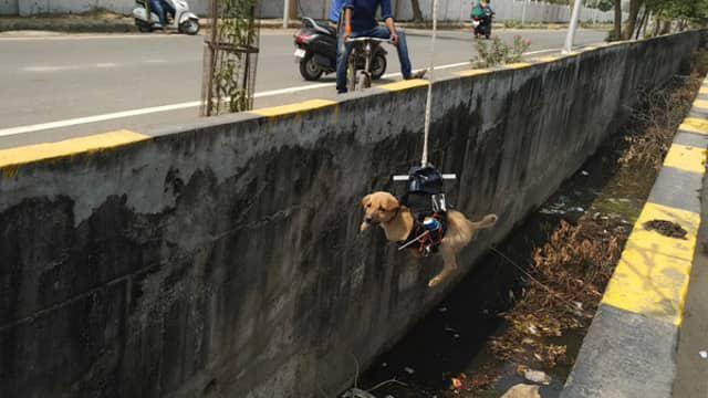 Zmodyfikowany dron uratował życie szczeniaczka