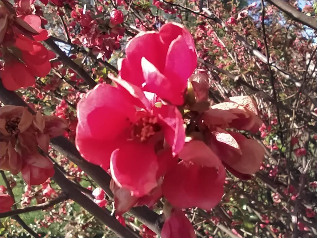 Redmi Note 8T - zdjęcie kwiatów z obiektywu makro