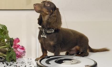 iRobot Roomba 564 PET - bezworkowy odkurzacz dla posiadaczy zwierząt