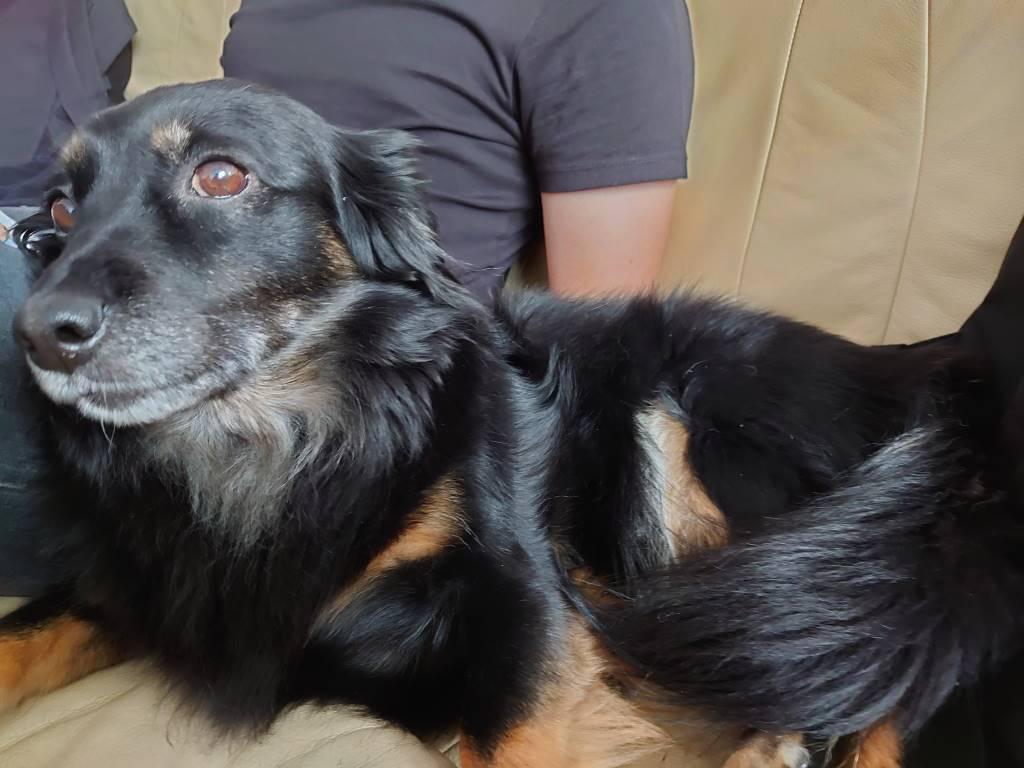 Sony Xperia 5 - zdjęcie psa w trybie automatycznym
