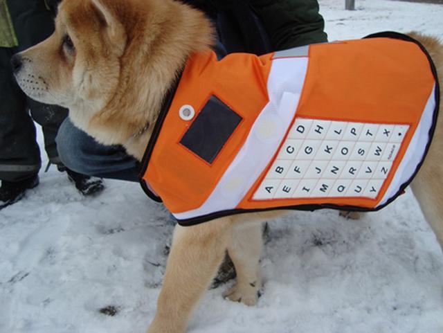 Telefon komórkowy dla psa