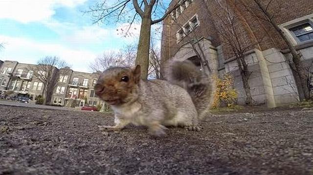 Wiewiórka Nagrała Swój Filmik Kamerką GoPro