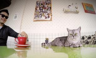 Kocia Kawiarnia w Obiektywie GoPro