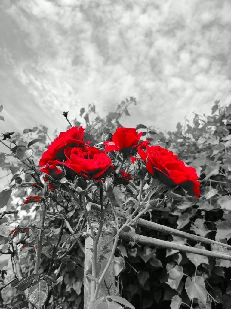 Kolor spotowy na kwiatach