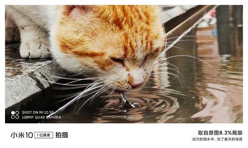 Zbliżone zdjęcie kota Xiaomi Mi 10