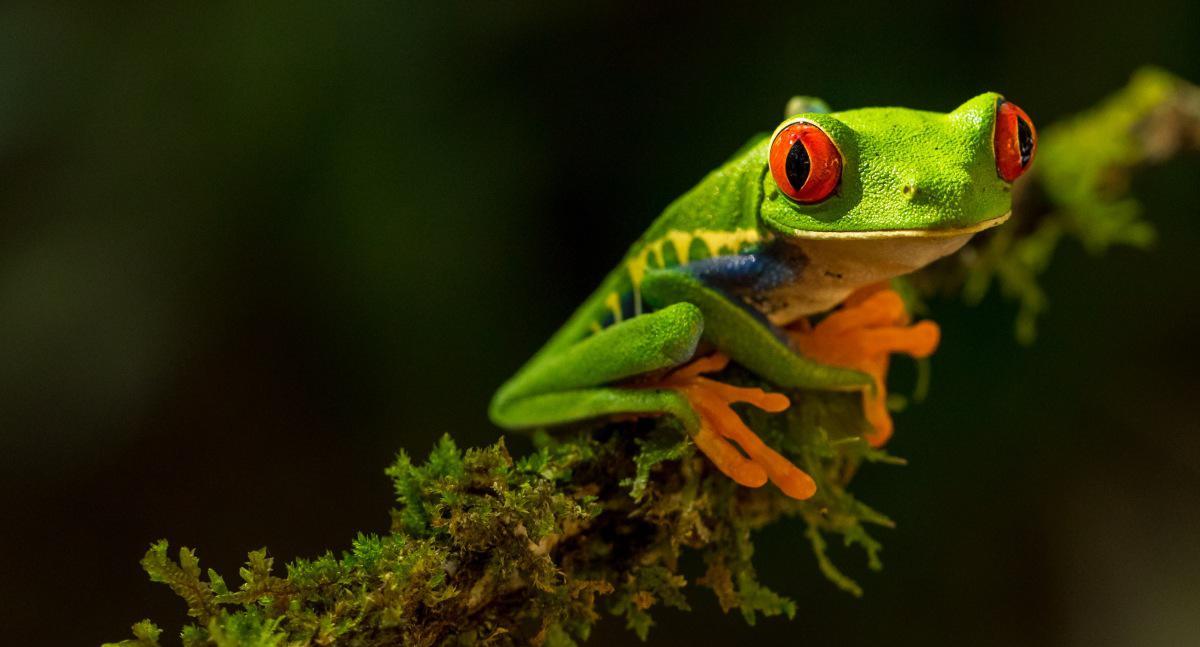 Informację o żabach otrzymujemy po zadzwonieniu na telefon