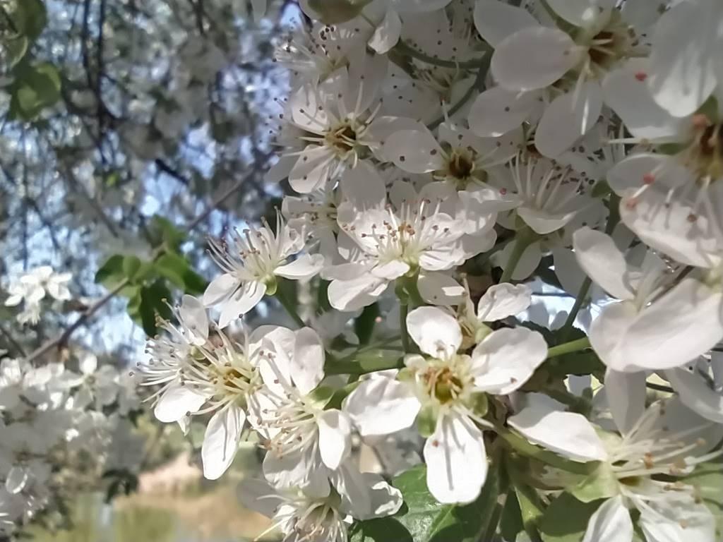 Redmi Note 8T - zbliżenie na kwiaty z obiektywu makro