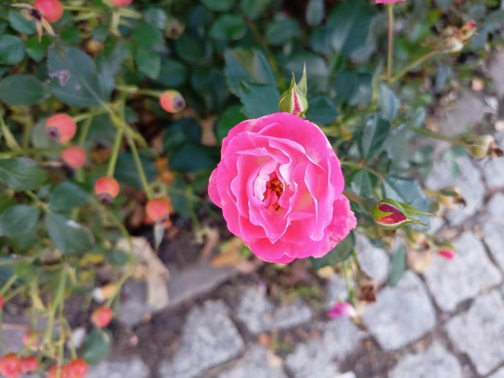 realme 7 - kwiat w trybie automatycznym