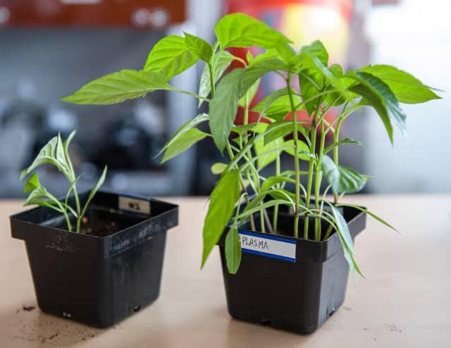 PAW wspomaga zdrowy wzrost roślin