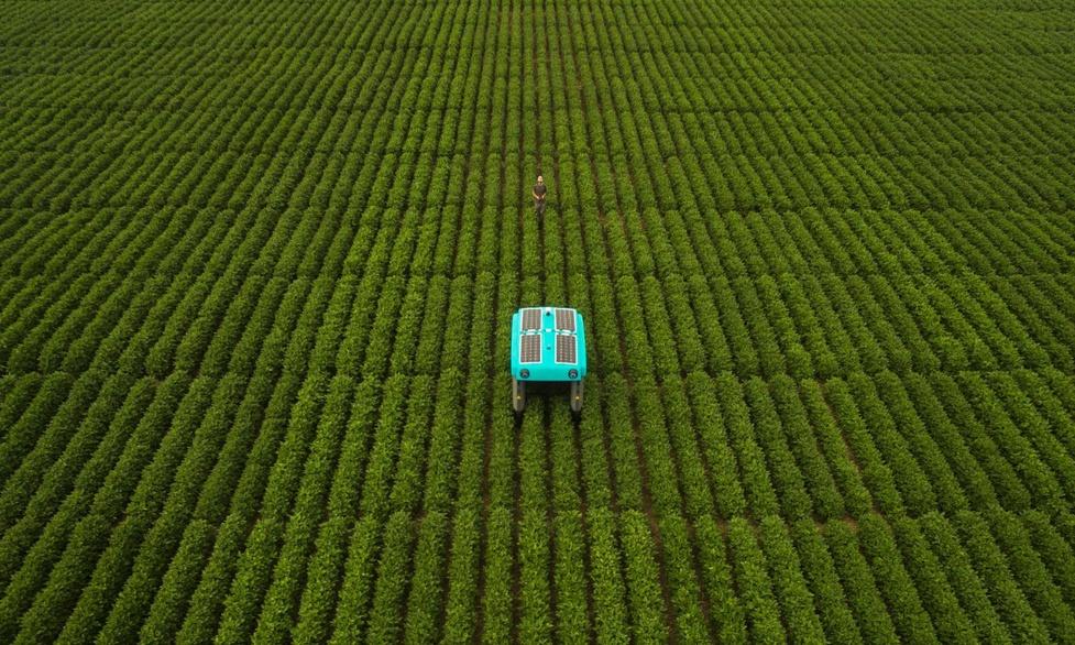 Autonomiczny robot Google'a pomoże rolnikom