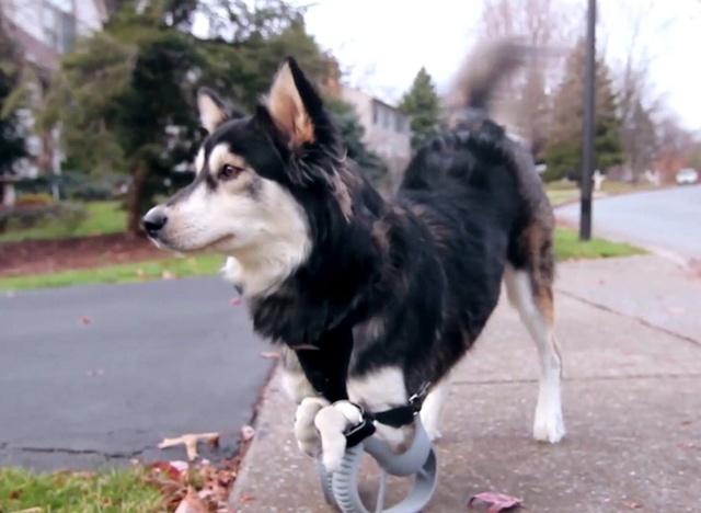 Drukarki 3D Pomagają Także Zwierzętom
